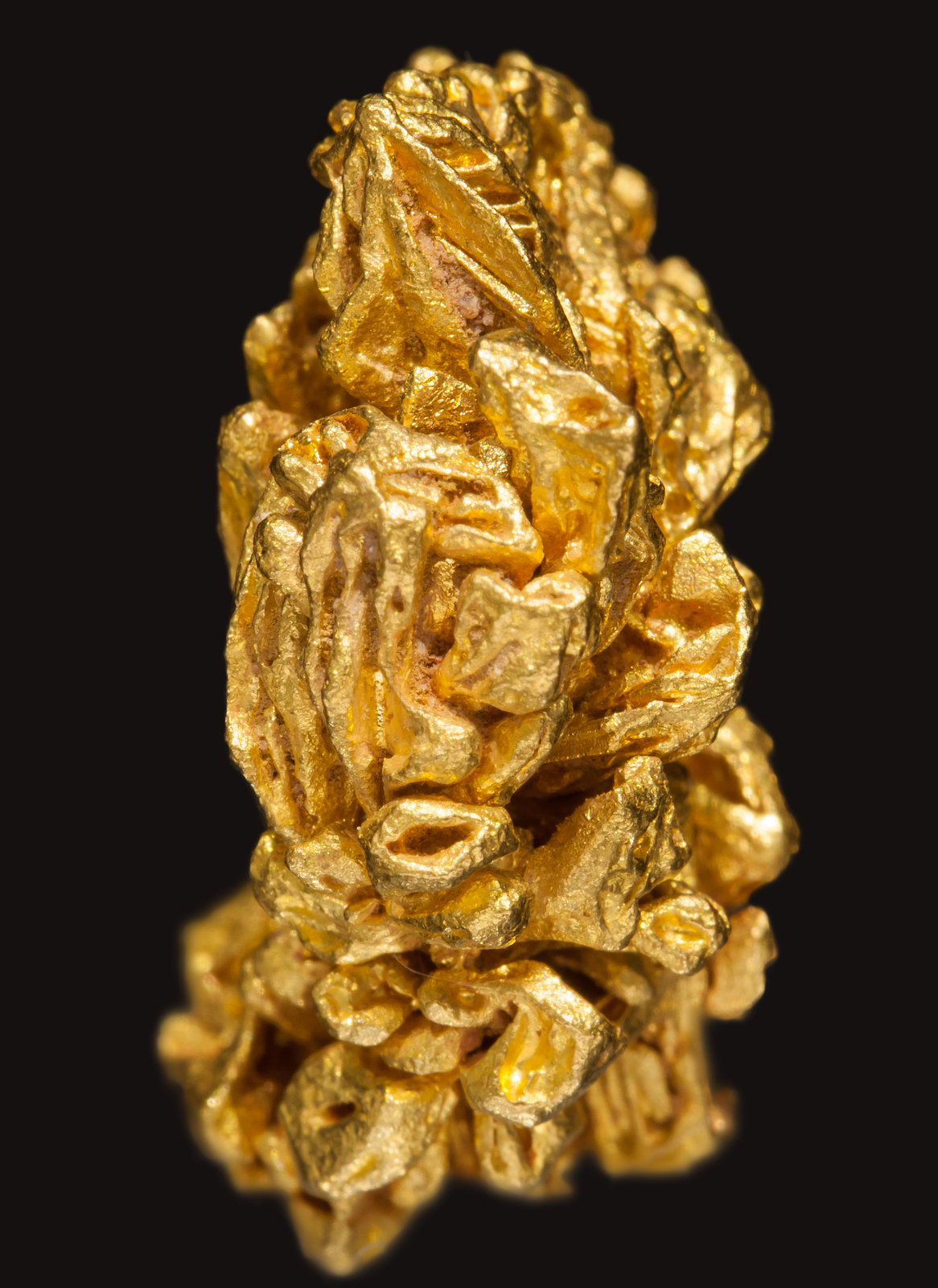 specimens/s_imagesAE5/Gold-EE97AE5s.jpg