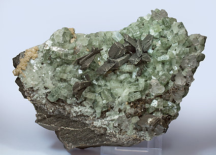 Arsenopyrite with Pyrite, Fluorapatite and Siderite.