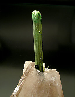Elbaite on smoky Quartz and Albite.