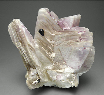 Tantalite-(Mn) with Lepidolite.