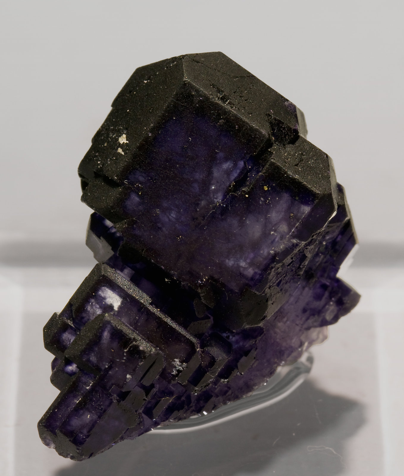 specimens/s_imagesS6/Fluorite-X56RS6.jpg