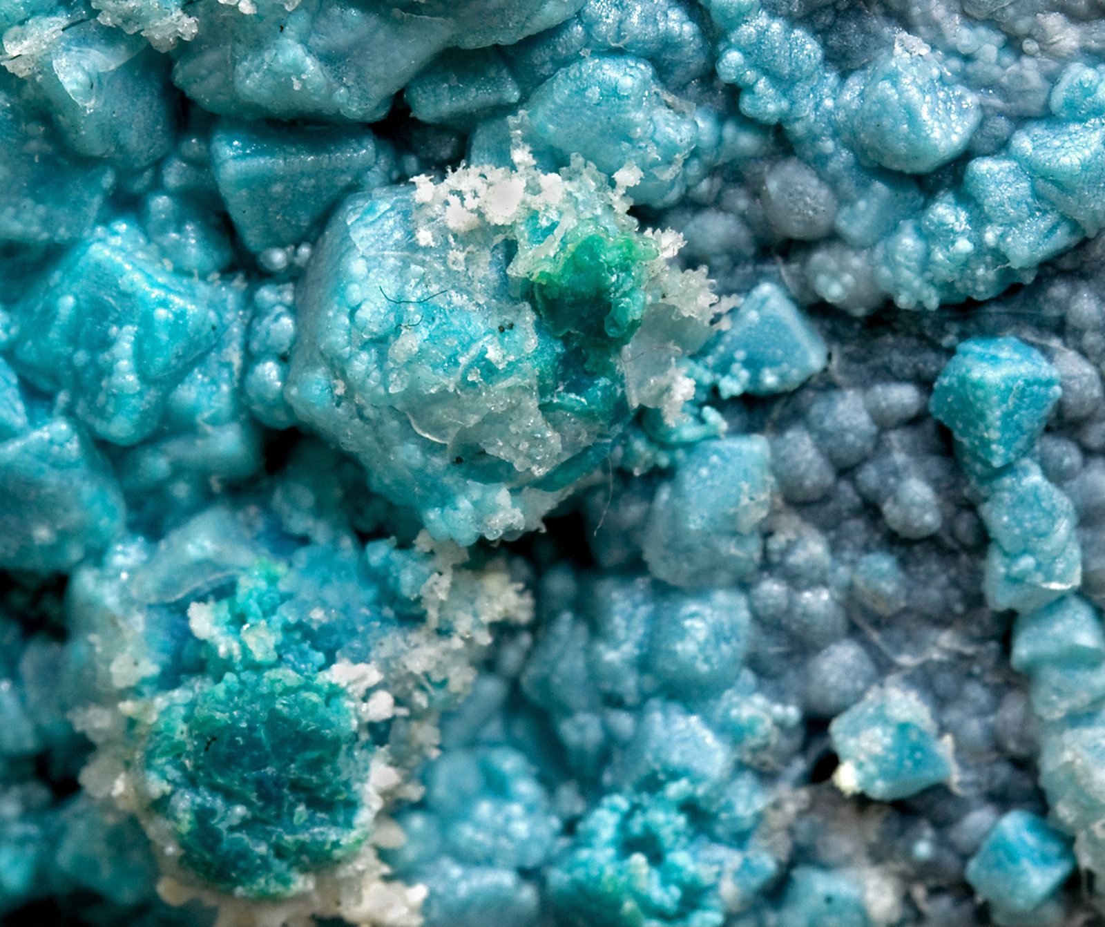 specimens/s_imagesV1/Chrysocolla-TC36V1d.jpg